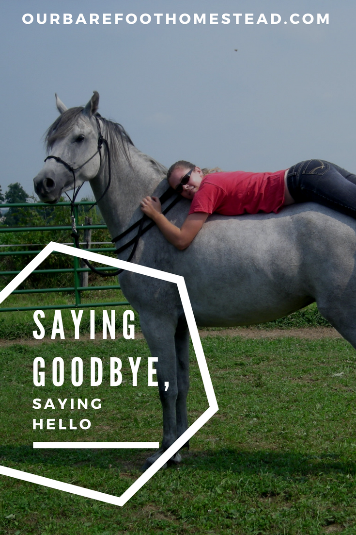 Endings are so often also new beginnings. Goodbye and hello in one fell swoop. We at the Barefoot Homestead recently experience a heart-wrenching goodbye, and it leaves us wondering what the next hello might be.