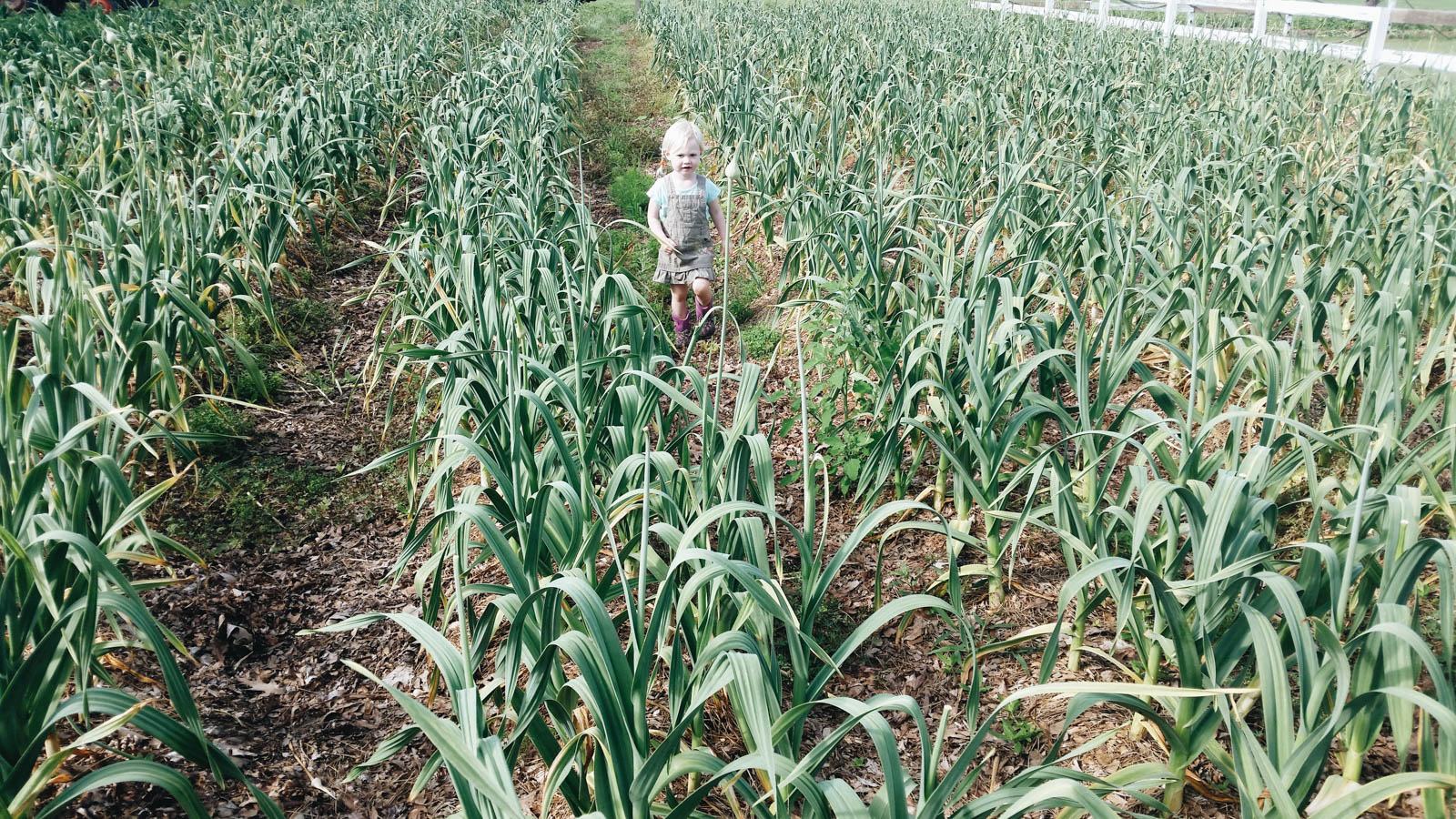Fiona in the field of elephant garlic