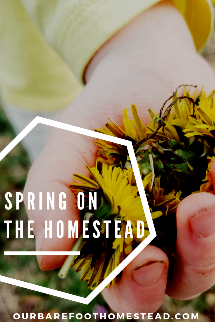 Spring on the Barefoot Homestead