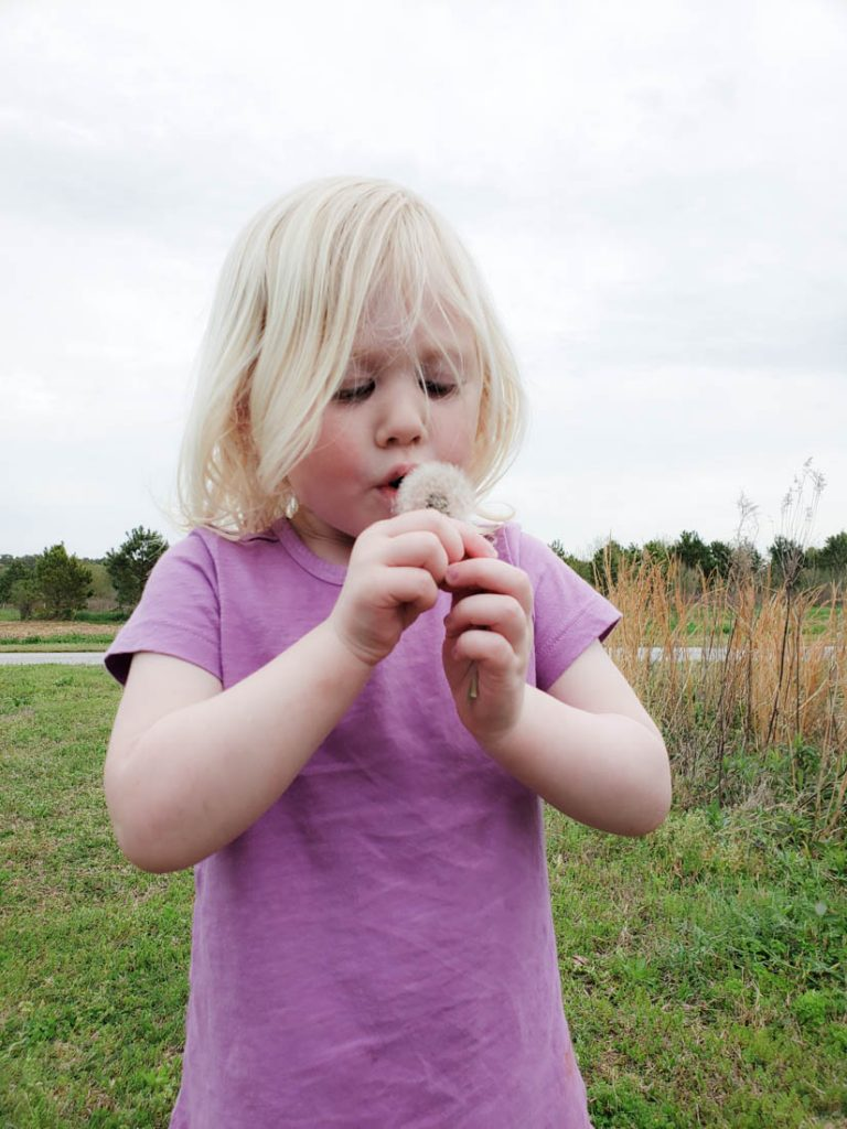 Toddler girl blowing on a spent dandelion